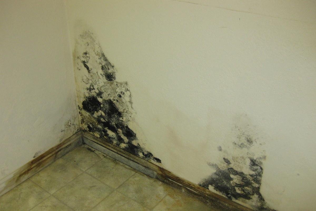 Home / Mold Damage
